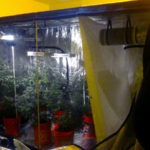 Apollo Horticulture Grow Tent Review: Must Read Before You Buy