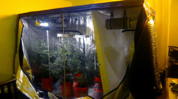 Apollo horticulture grow tent