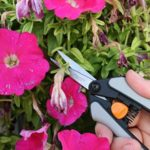 Fiskars Pruning Shears : Must Read Before You Buy